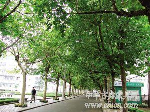 绿色植被茂密的园林化小区
